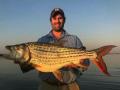 Tiger Fishing Zambezi River